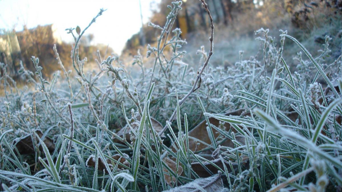 Заморозки до -3 градусов ожидается в Казахстане