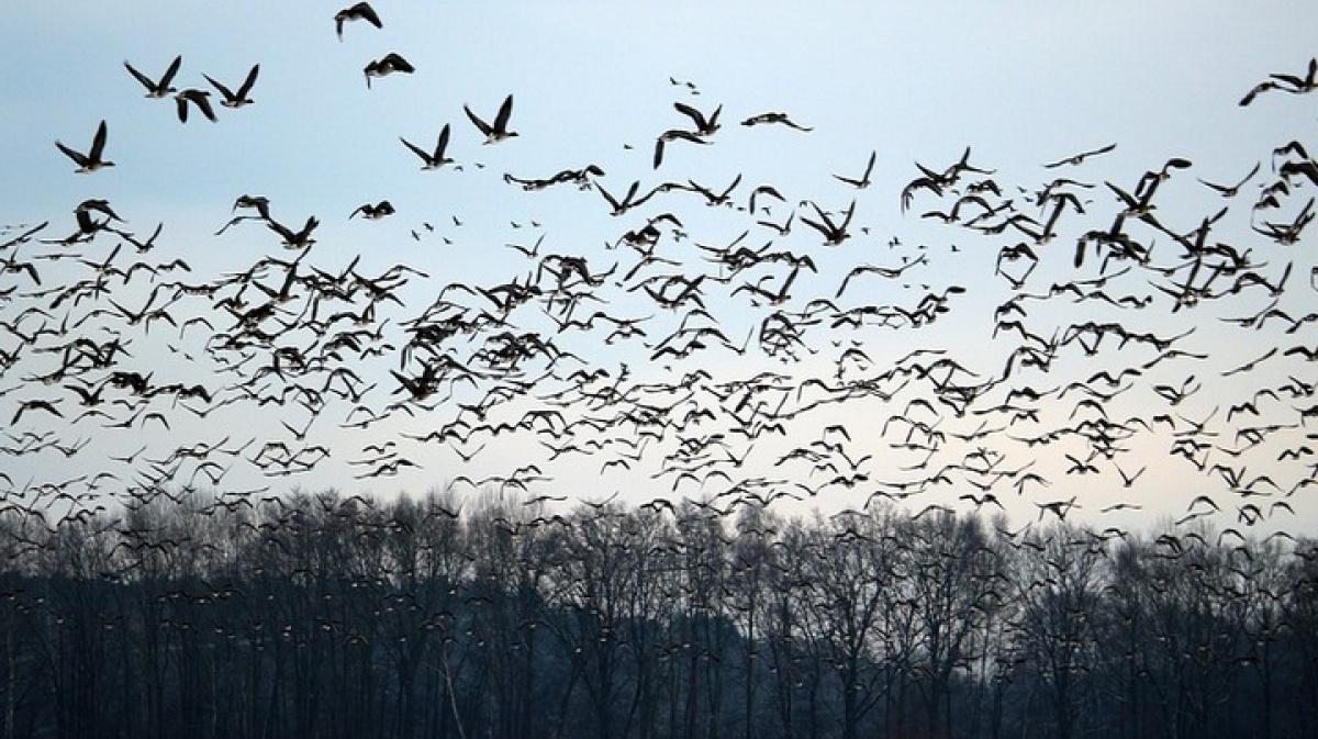 В северных регионах Казахстана по маршруту перелетных птиц проведут вакцинацию против птичьего гриппа