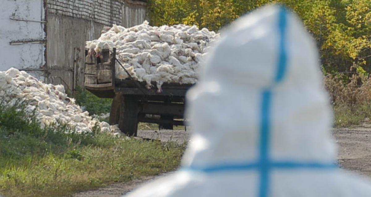 В шести областях Казахстана ввели карантин из-за птичьего гриппа