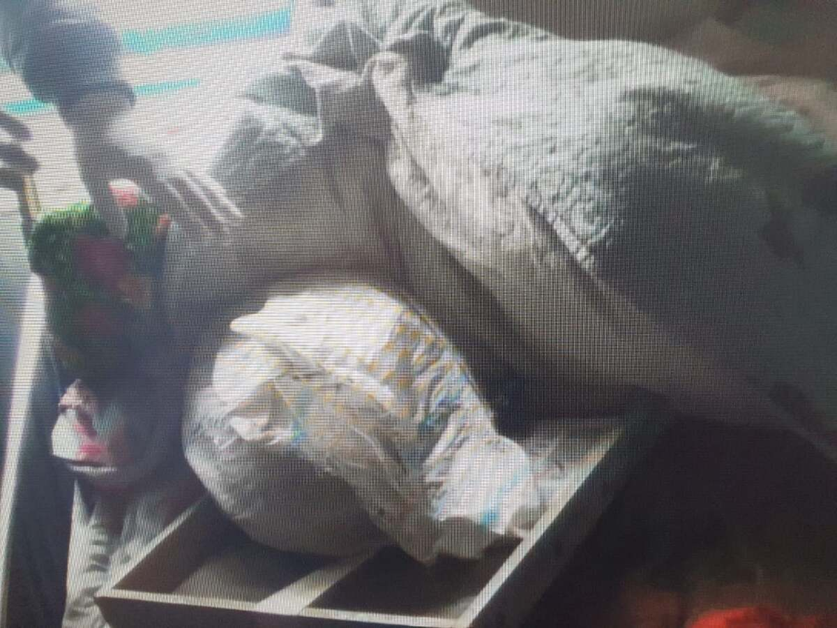 Около 9 кг марихуаны изъяли у пастуха в Жамбылской области