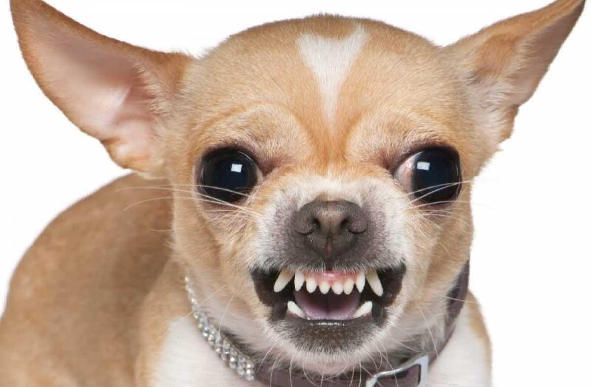 Какие породы собак самые агрессивные?