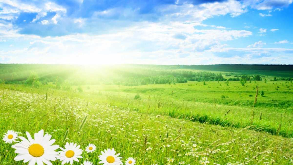 Приметы на 17 мая 2021: в этот день определяли, каким будет лето