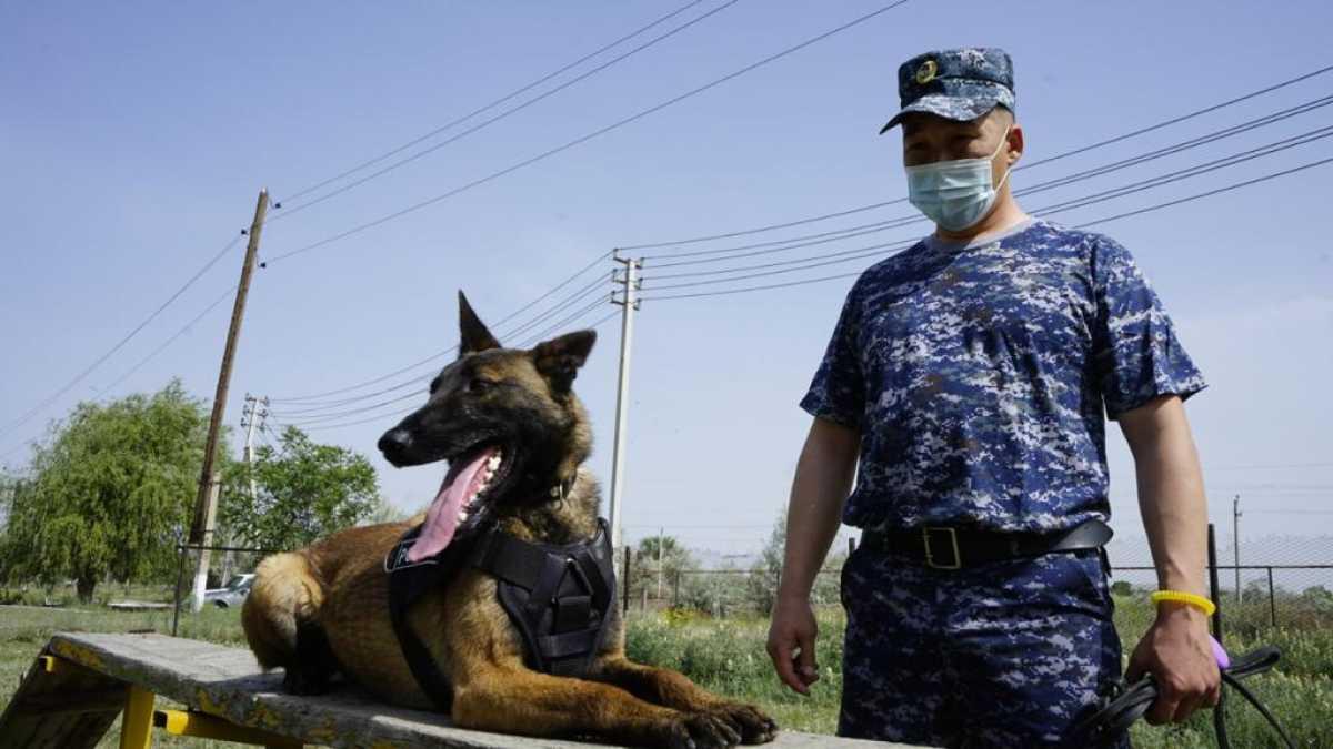 Более 5 килограммов наркотиков обнаружила служебная собака у жителя Тараза