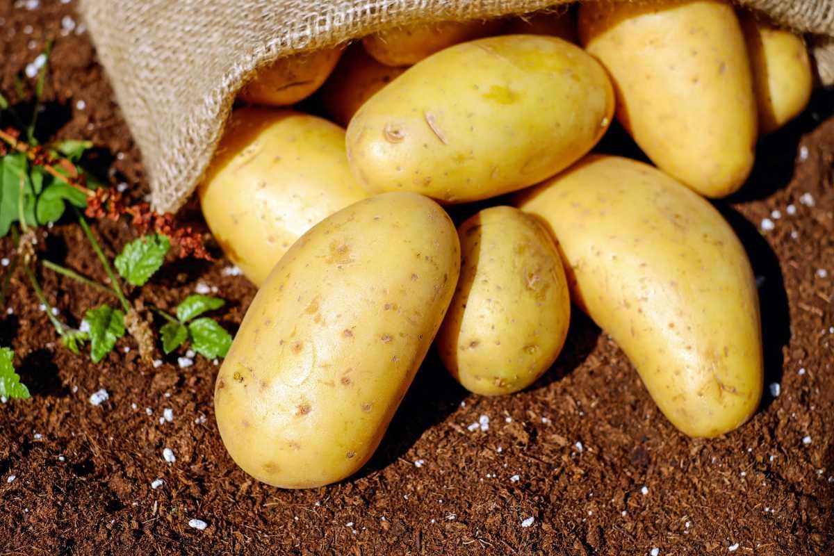 Виновных в дефиците картофеля назвал министр Султанов