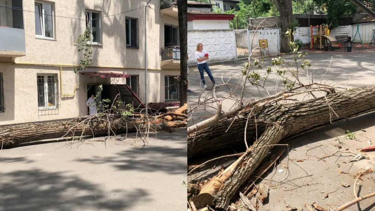 Дерево едва не упало на ребенка в Алматы