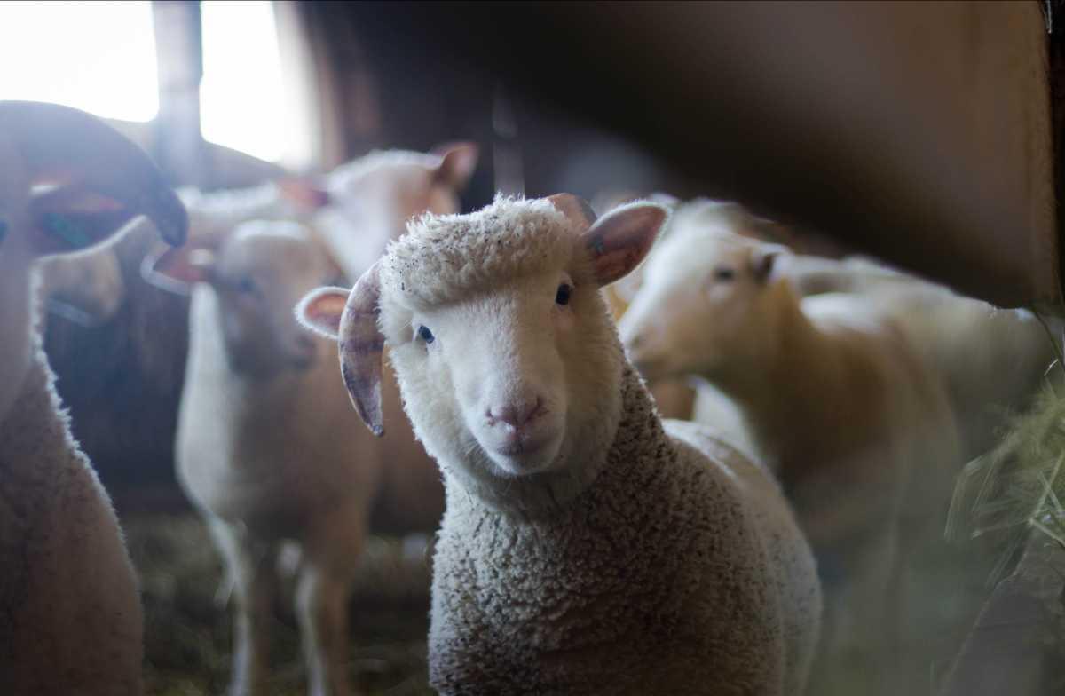 Падеж скота из-за засухи в двух областях прекратился, утверждает Минсельхоз Казахстана