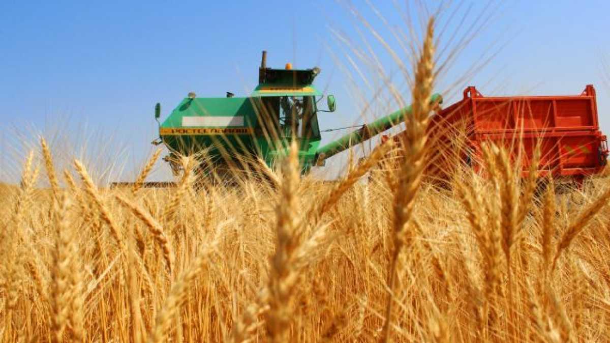 Экспорт пшеницы из Казахстана вырос на 29% за год