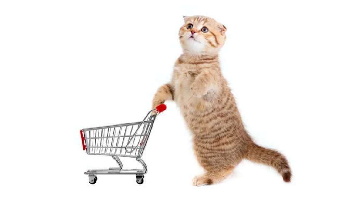 Особенности покупок в онлайн-зоомагазине
