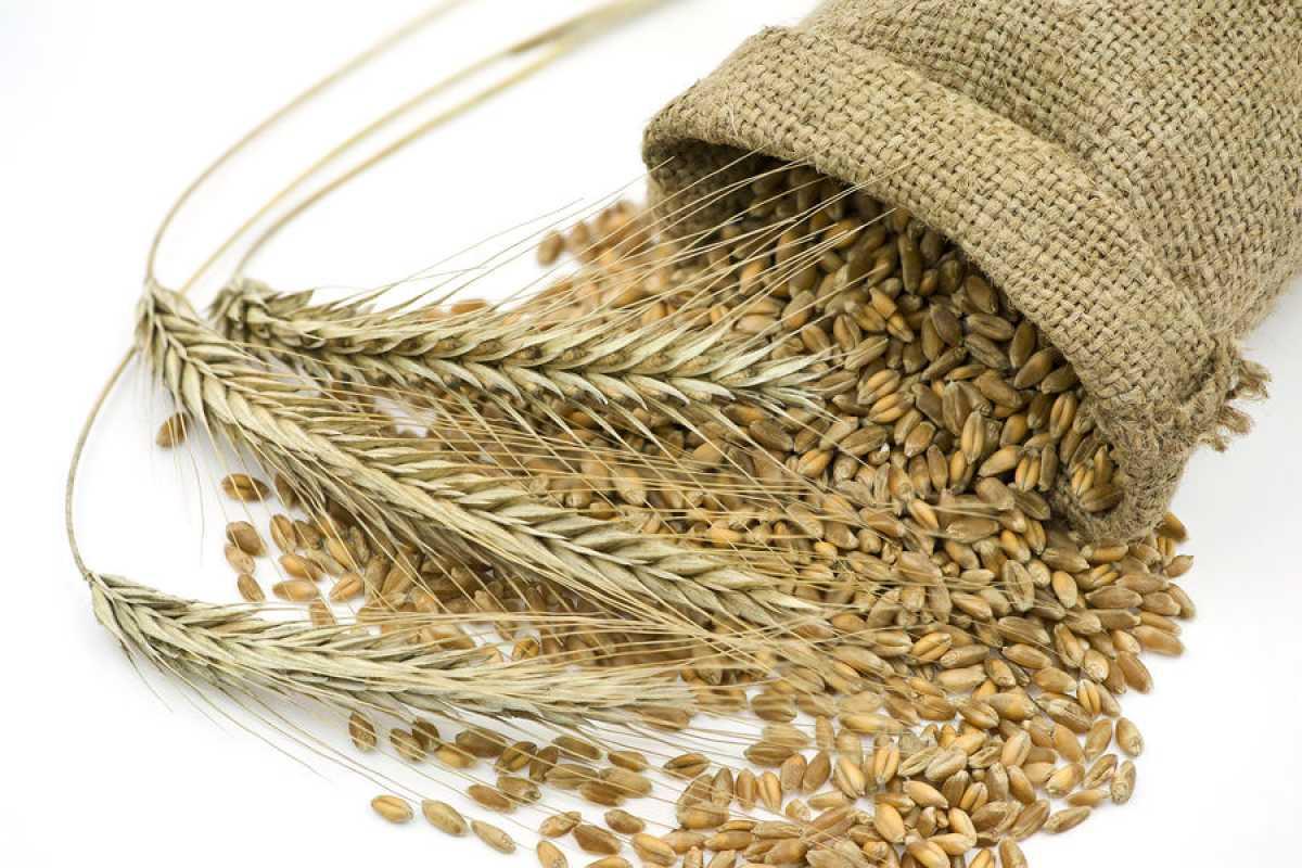 Диетологи рассказали, какой хлеб нужно есть для похудения