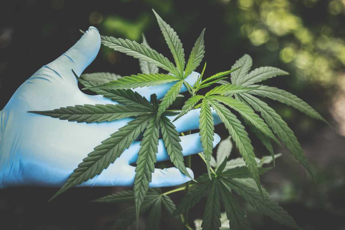 Свыше 2 кг марихуаны нашли у жителя Алматинской области