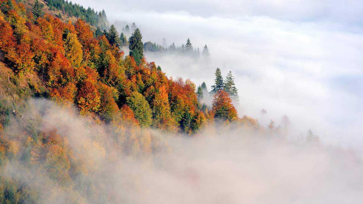 Туман и ветер: в нескольких регионах Казахстана объявлено штормовое предупреждение